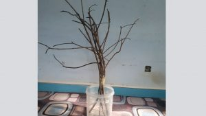 Felt ball tree with real branches